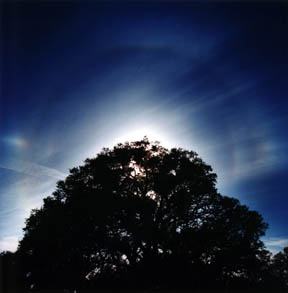 Oak Crowned by Rare Double Solar Halo